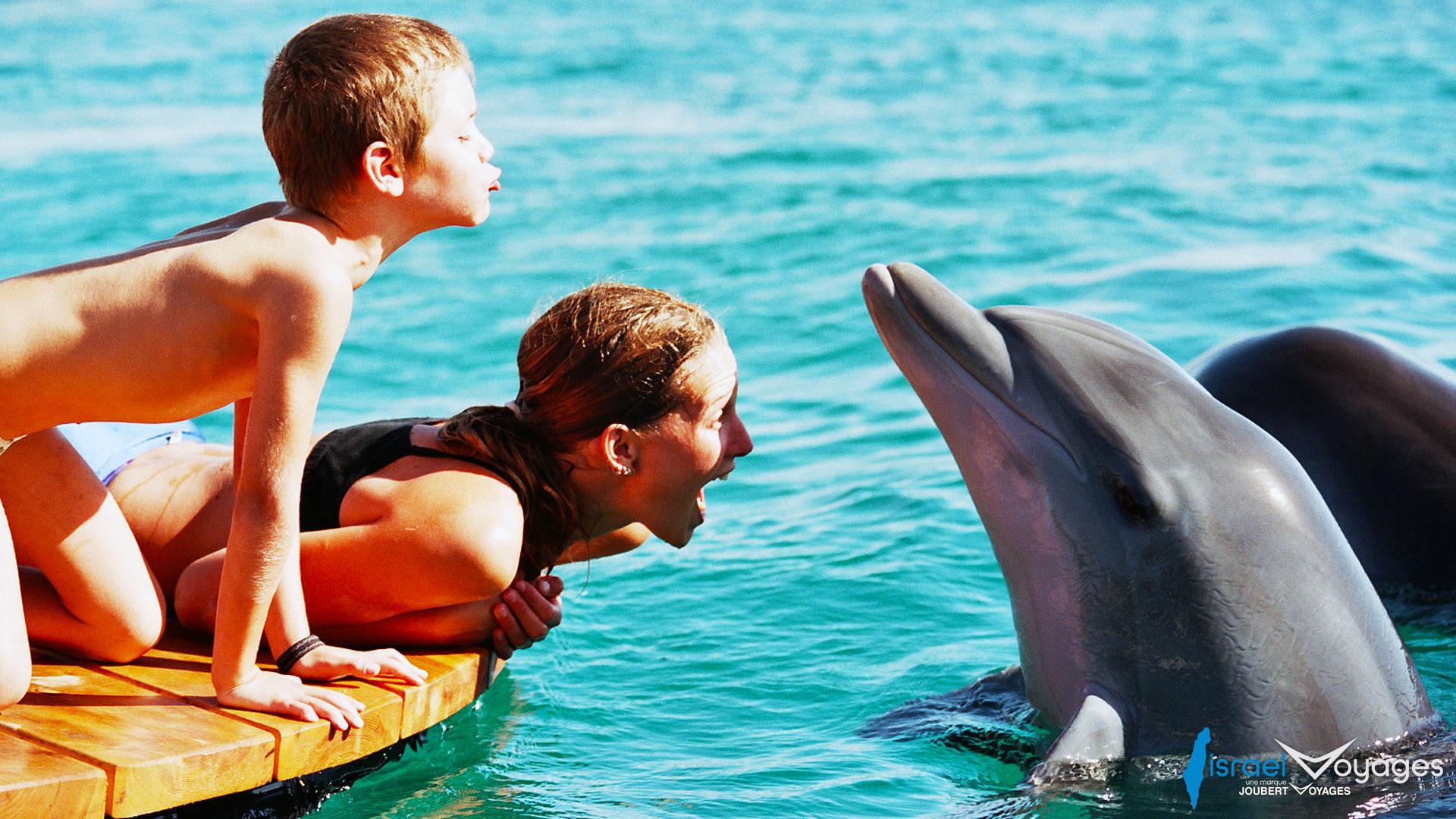 Nage avec les Dauphins à Eilat